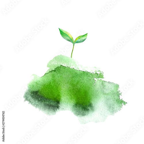 Sprout in the grass Tapéta, Fotótapéta