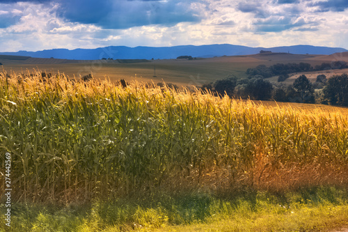 Canvas Prints Honey Beautiful landscape in Southern Poland near Klodzko