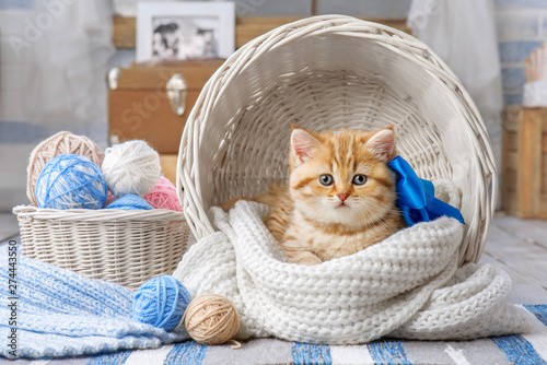 Cadres-photo bureau Chat Cute kitten with a bow in a basket with balls of yarn