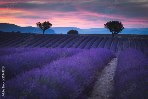 Printed kitchen splashbacks Eggplant Lavender fields in Provence France ladnscape pretty hot summer