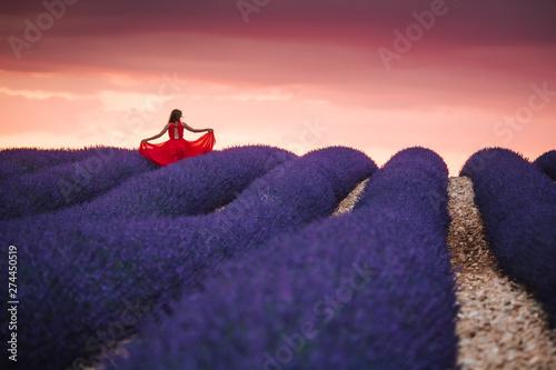 Papiers peints Grenat Lavender fields in Provence France ladnscape pretty hot summer