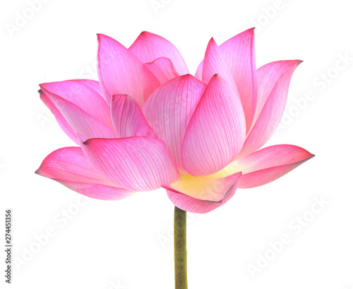 In de dag Waterlelies lotus isolated on white background.