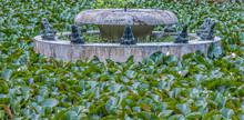 Water Lily Pond, Borisova Gradina (Boris' Garden), The Oldest And Best Known Park In Sofia, The Capital Of Bulgaria. Nnamed After Bulgarian Tsar Boris III