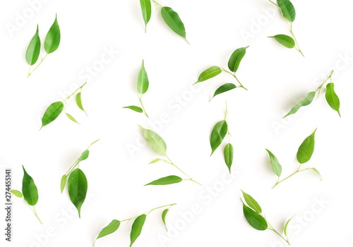 Fotografía  Green ficus leaves pattern isolated on white background top view