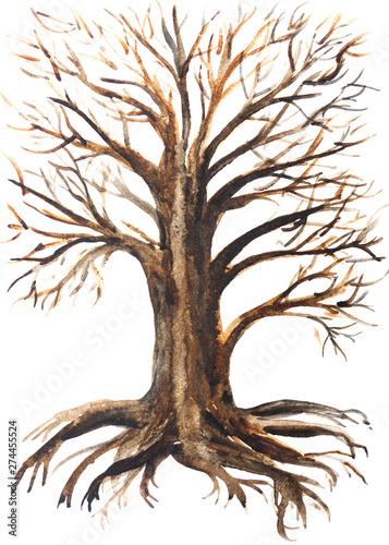 Fotografija  disegno di un albero grande con le radici su sfondo bianco