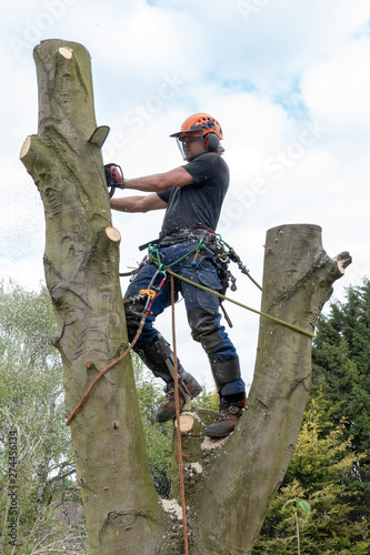 Photo Arborist or tree Surgeon cutting a tall tree stem using a chain saw