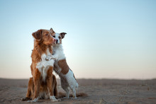 Two Dogs On The Sand Sunset. N...