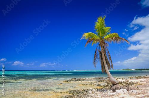 Palm tree on a tropical island