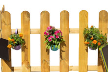 Closeup Of Three Buckets With Colorful Flowers And Two Blank Black Boards Hanging On A Light Wooden Fence. Decoration Background And Design Element Isolated On A White Background.