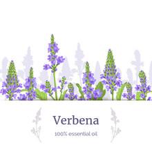 Verbena Plant. Stems And Flowe...