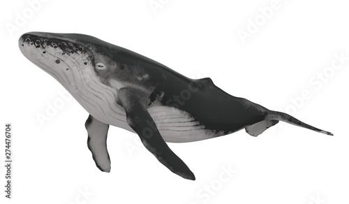 Fototapeta Whale Isolated