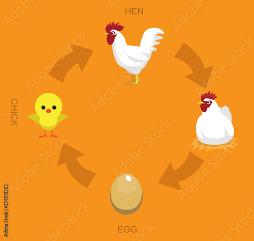 Chicken Life Cycle Vector Illustration Background Wallpaper Mural