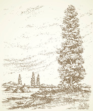 Poplar On A Hill Above The River. Vector Drawing