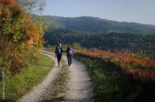 Camminando lungo la ciclovia Parenzana Canvas Print