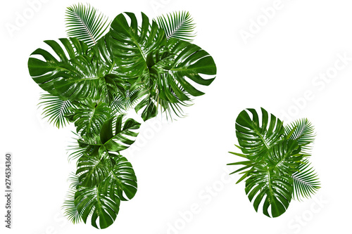 Garden Poster Plant Tropical green leaf frame ,tropical leaf garland on white background