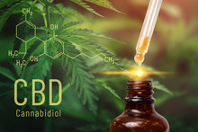 Cannabis CBD Oil Extracts In J...