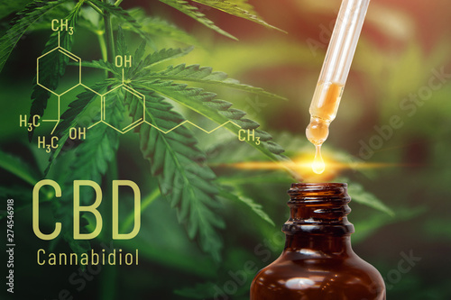 Fototapeta Cannabis CBD oil extracts in jars herb and leaves. Concept medical marijuana obraz