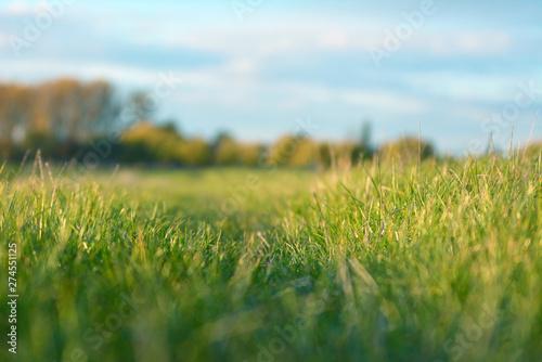 Türaufkleber Pistazie Beautiful idyllic outdoors meadow scene with selective focus on grass und bue sky in blurry background