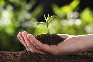 Woman holding young green seedling in soil against blurred background, closeup