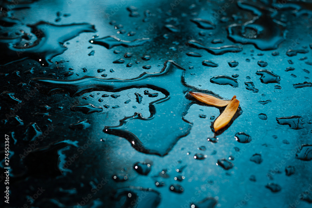 Fototapety, obrazy: Closeup of yellow petals with raindrop on glass floor after rain