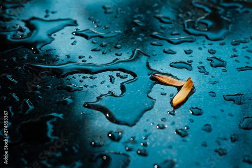 Fotografia  Closeup of yellow petals with raindrop on glass floor after rain