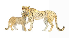 Hand Drawn Watercolor Illustration With Cute Cheetahs. Baby And Mother Cheetah Isolated On The White Background