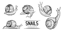 Set Of Outlines Snails. Hand Drawn Illustration Converted To Vector