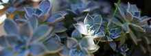 Flower Photo Background Beautiful Flower Growing In A Pot