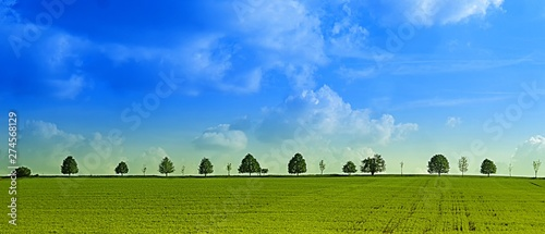 Fotografia, Obraz  Broad leaf tree avenue on a horizon behind green agriculture field in the spring
