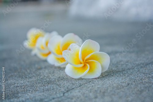 Leela flowers that are arranged together фототапет