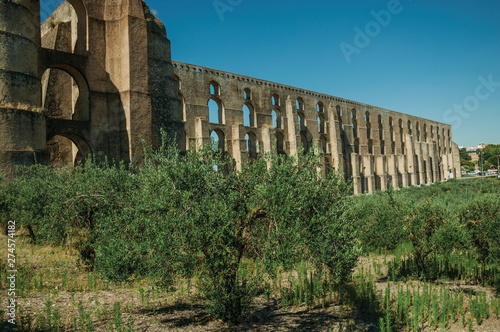 Olive trees in front aqueduct with arches near road to Elvas Slika na platnu