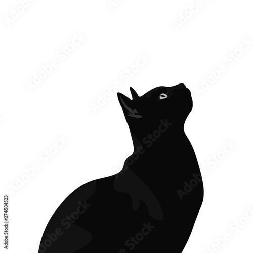 Tela Ilustración de gato de pelo negro