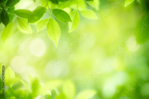 Nature view of green leaf on blurred greenery background in garden using as background natural green leaves plants landscape, ecology, fresh wallpaper