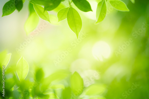 Montage in der Fensternische Lime grun Closeup nature view of green leaf on blurred greenery background in garden with copy space for text using as summer background natural green plants landscape, ecology, fresh wallpaper concept.