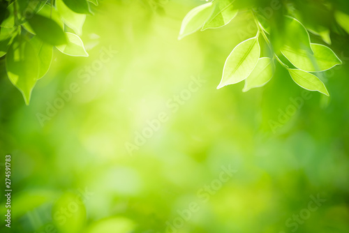 Printed kitchen splashbacks Garden Closeup nature view of green leaf on blurred greenery background in garden with copy space for text using as summer background natural green plants landscape, ecology, fresh wallpaper concept.