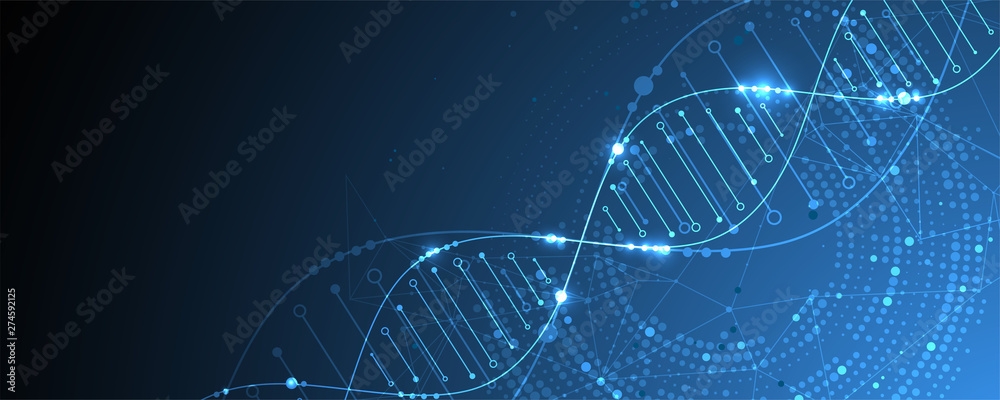 Fototapeta Science template, wallpaper or banner with a DNA molecules. Vector illustration.