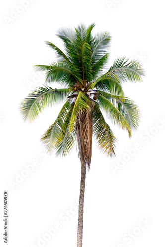 Canvas Prints Palm tree coconut palm trees isolated on white background. work with clipping path.