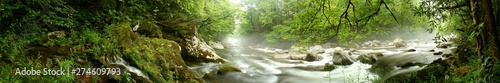 Acrylic Prints Forest river Panorama of a river flowing through a forest. Great Smoky Mountains, TN, USA.