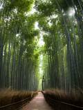 Fototapeta Na drzwi - Sun shining into bamboo forest - perfectly straight lines