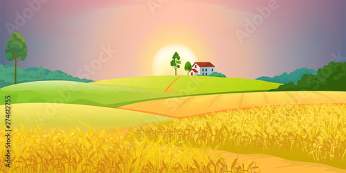 Wheat fields. Village farm landscape with green hills and sunset. Vector bright illustration rural agricultural countryside with buildings and trees