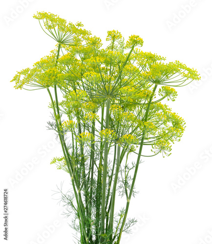 Photo Dill isolated on white.