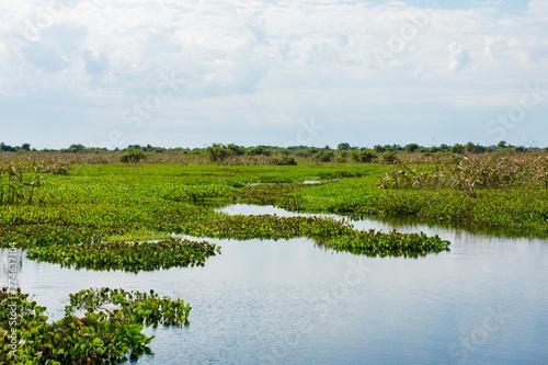 Fototapeta Vista de natureza desenhada com água no verde  obraz na płótnie