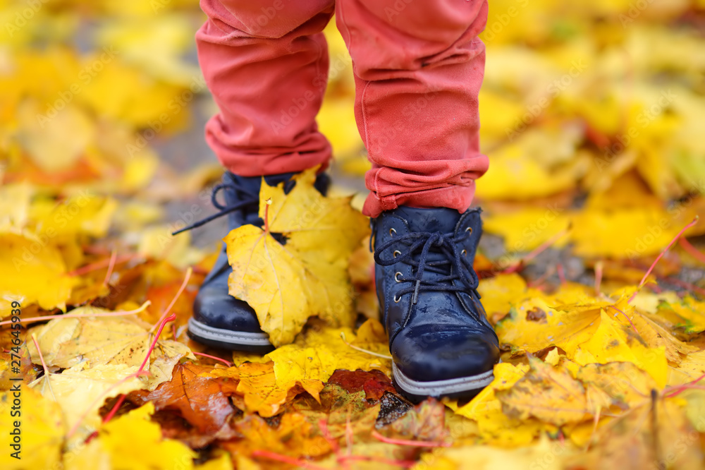 Fototapety, obrazy: Close up photo of child legs in boots on background of a golden maple leaves.