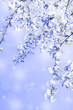 Lovely vertical background made of blooming cherry tree branch with shiny blurred sparkles