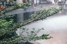 Detail Of Green Forest Indoor Garden, Shallow Depth Of Field