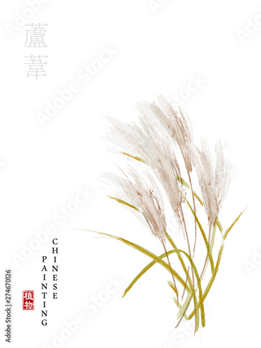 Obraz na płótnie Watercolor Chinese ink paint art illustration nature plant from The Book of Songs reed