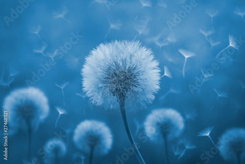Spoed Foto op Canvas Paardenbloem Dandelion with its seeds blown by the wind