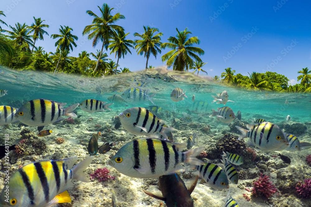Fototapeta Underwater Scene With Reef And Tropical Fish
