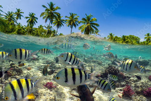 Underwater Scene With Reef And Tropical Fish Canvas Print