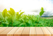Green tea bud and leaves.Wooden board empty table in front of blurred background.